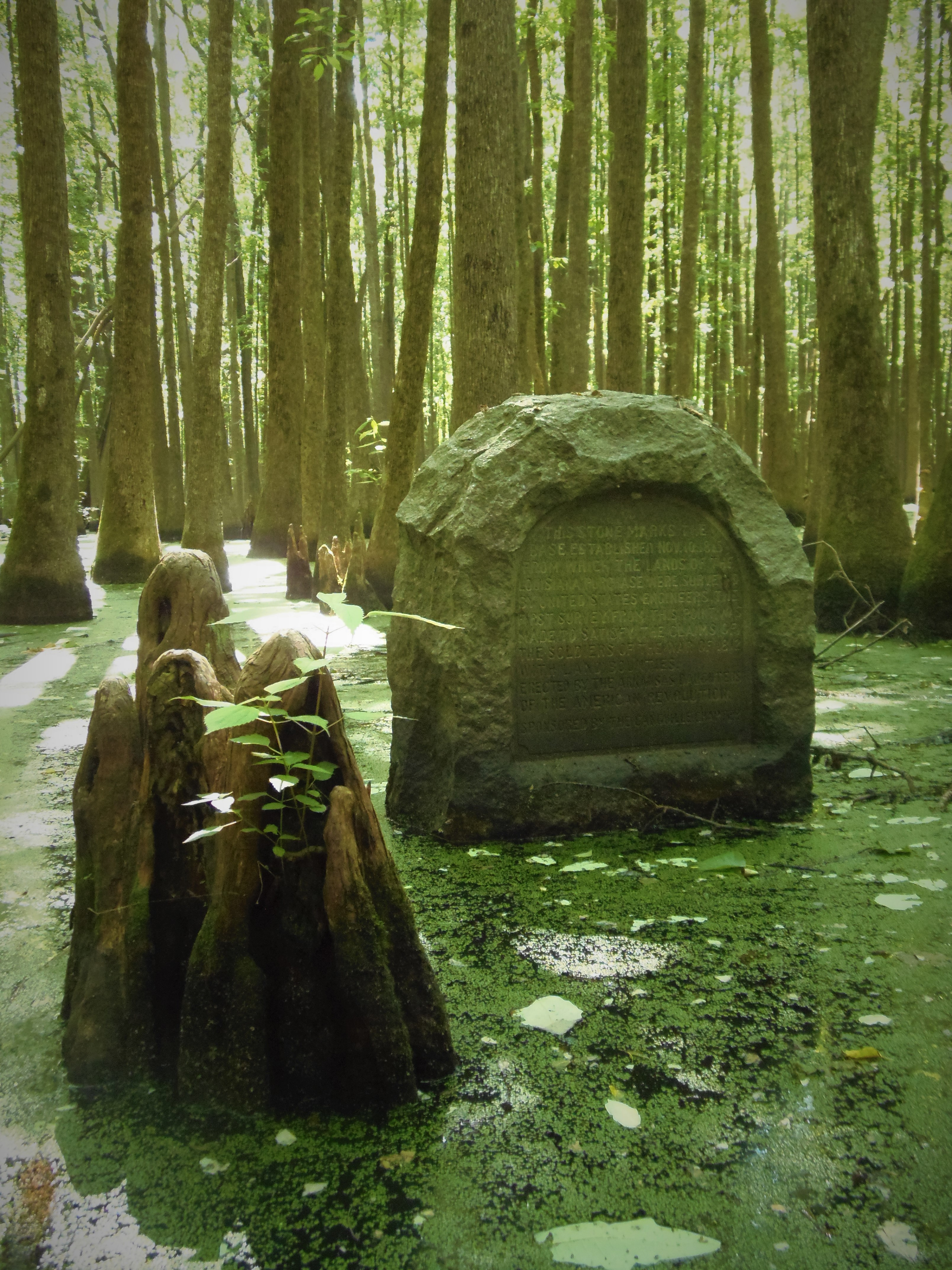 Granite monument in swamp with water at its base. Trees growing in background as far as viewer can see.