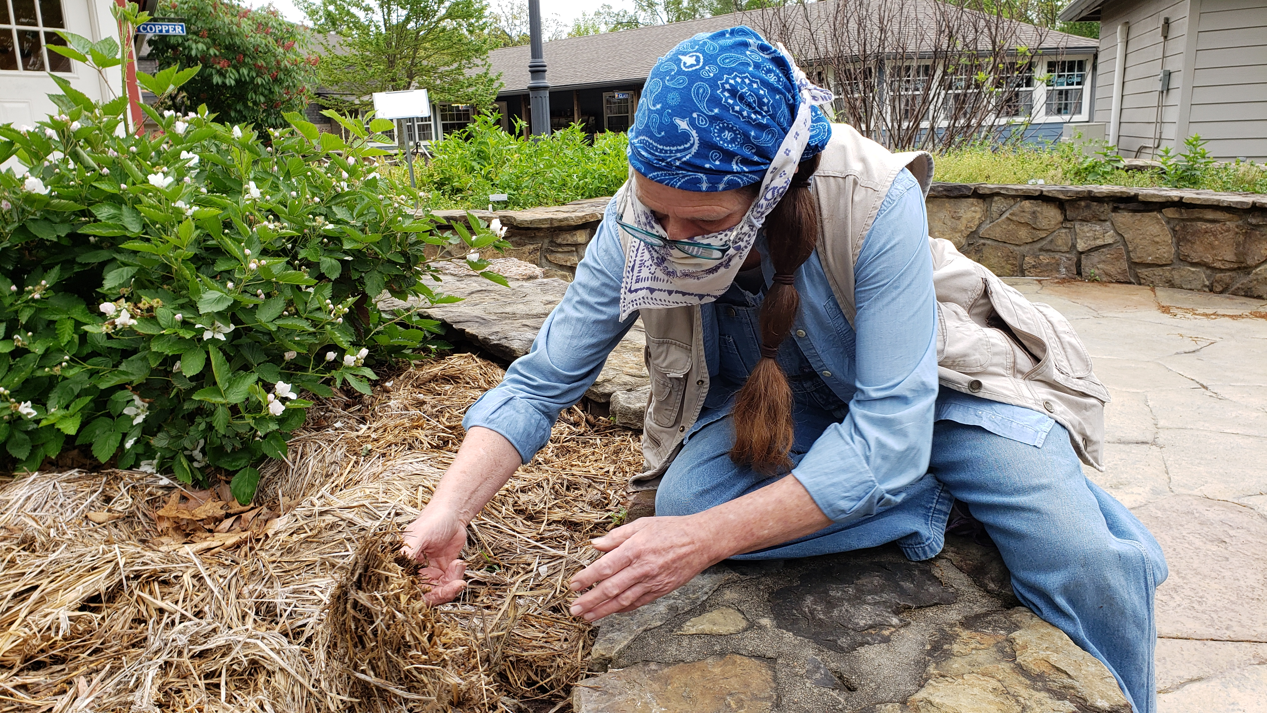 Tina Marie Wilcox distributes straw mulch around a raspberry plant in the accessible garden