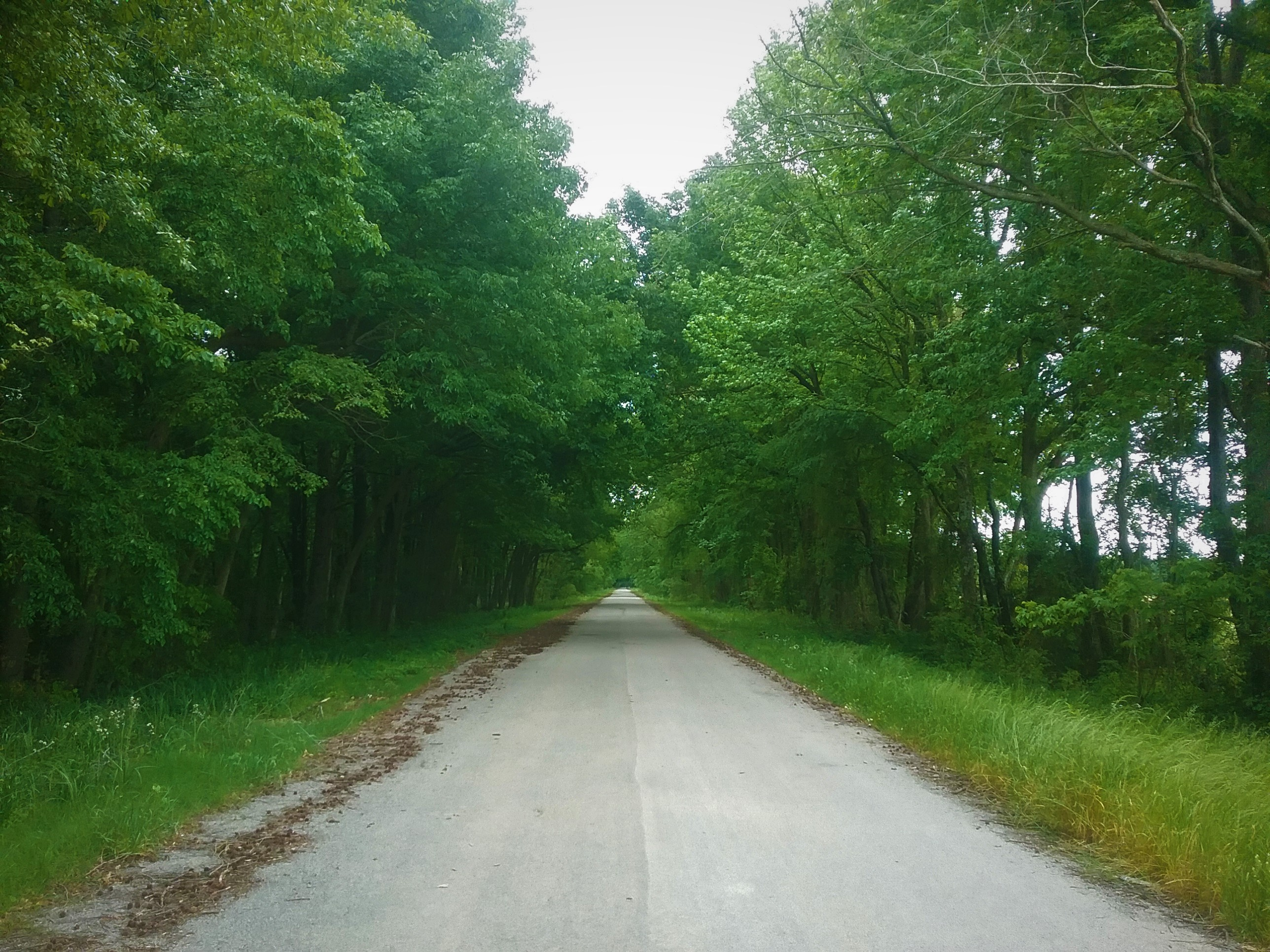 Straight road with trees lining both sides.