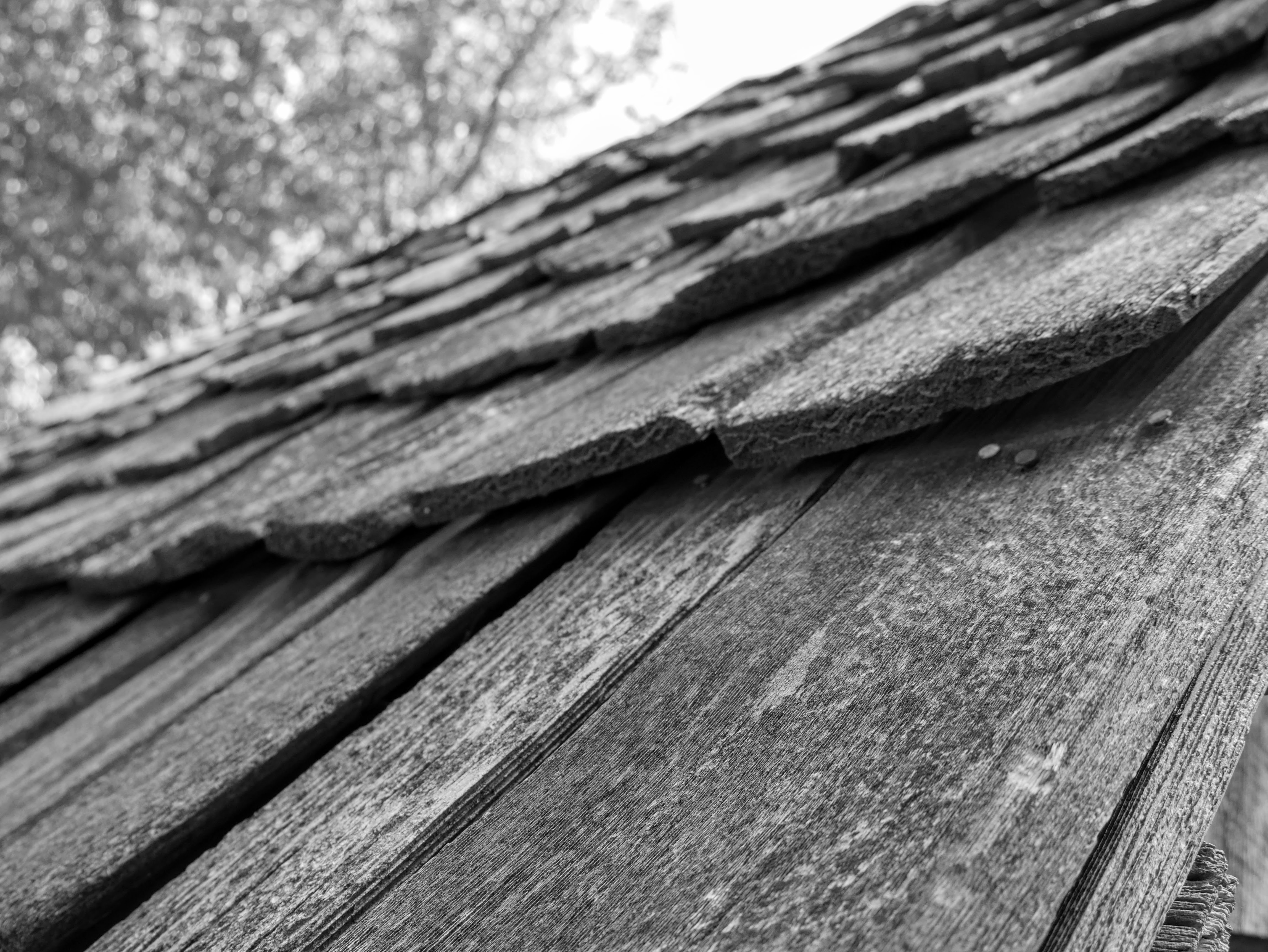 Close up view of irregularly sized, rectangular, wooden shingles in the foreground. A tree is out of focus in the background.