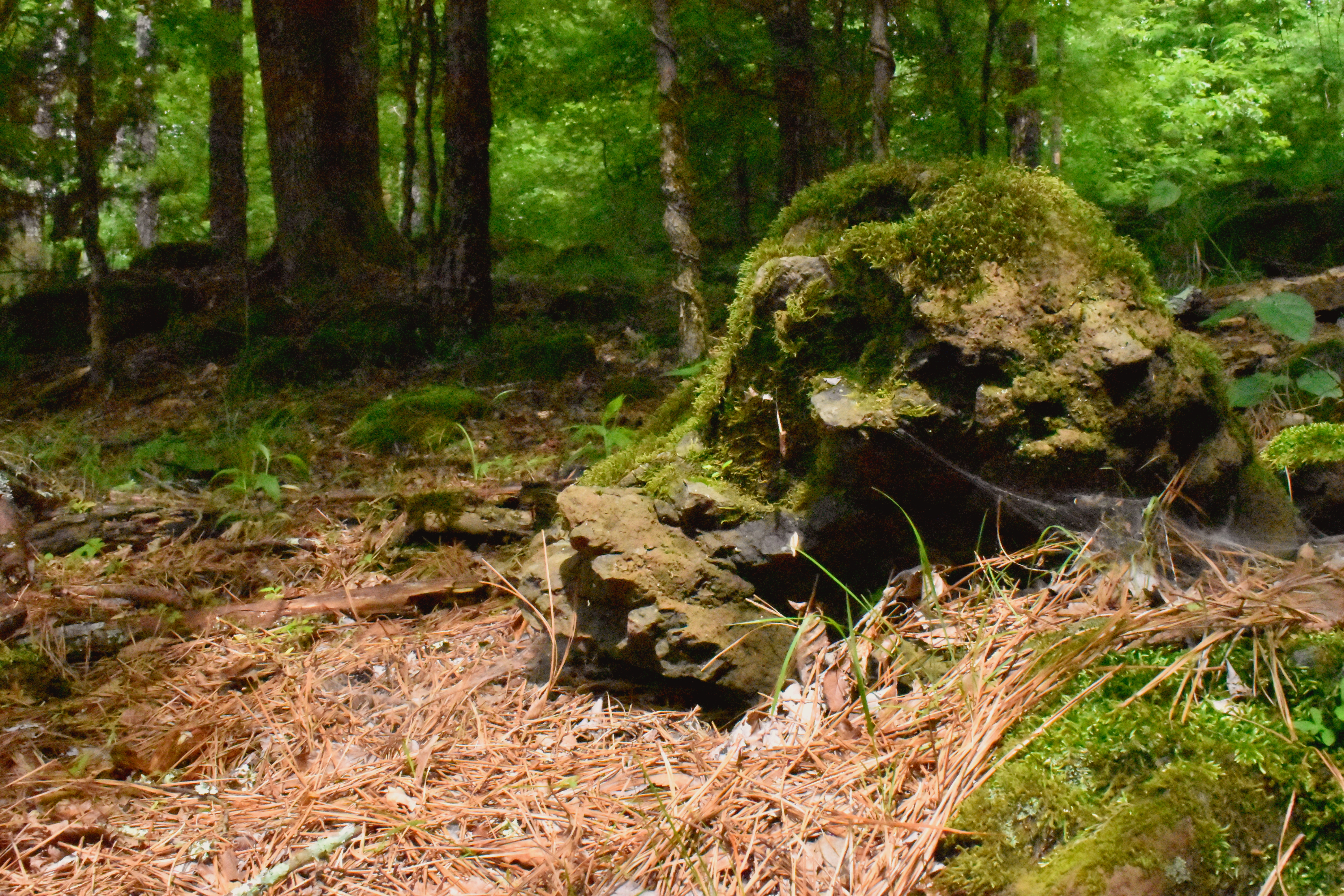 A moss-covered boulder in a hardwood forest.