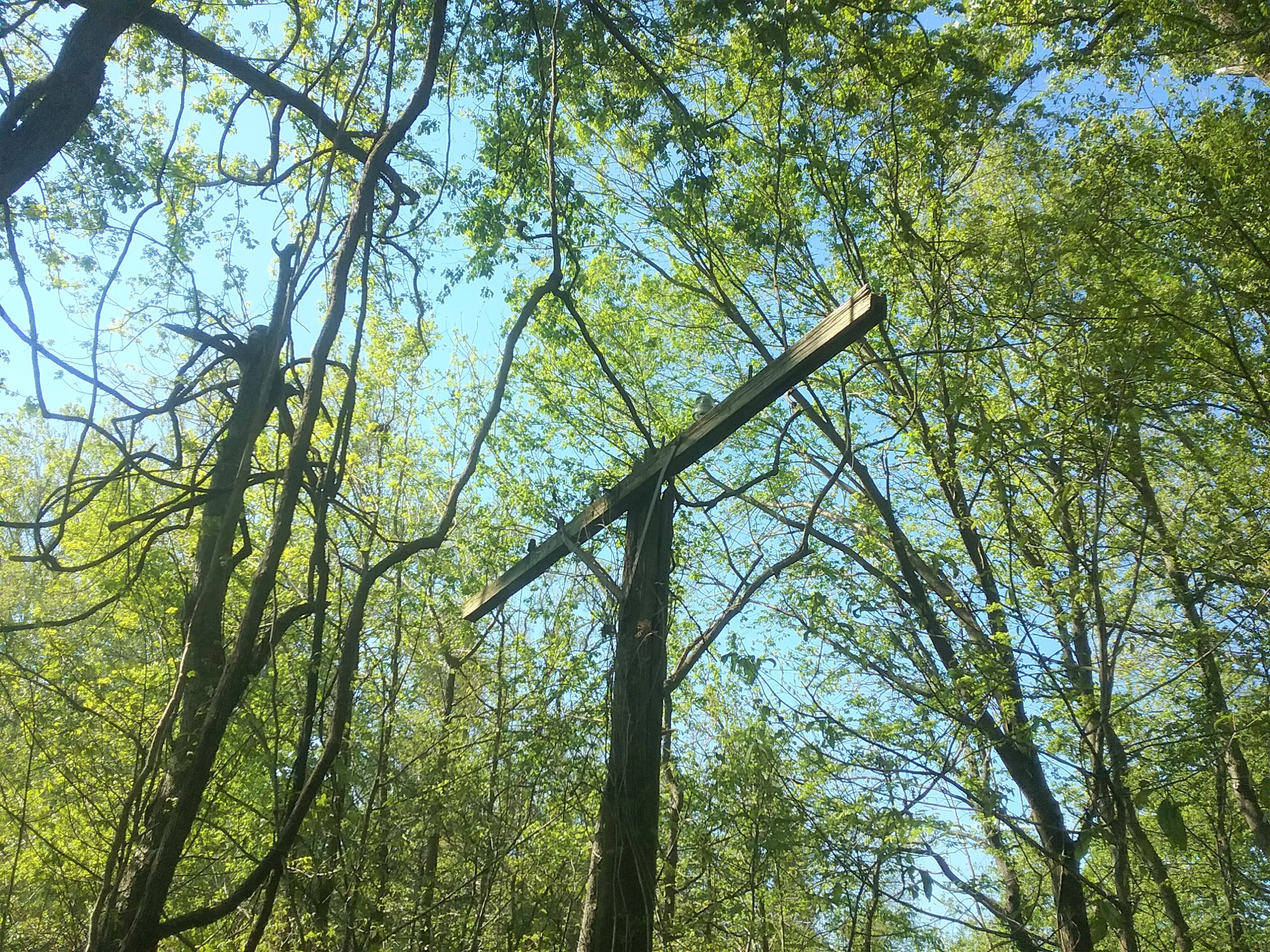 Top portion of an old telegraph pole stands among trees lining the trail