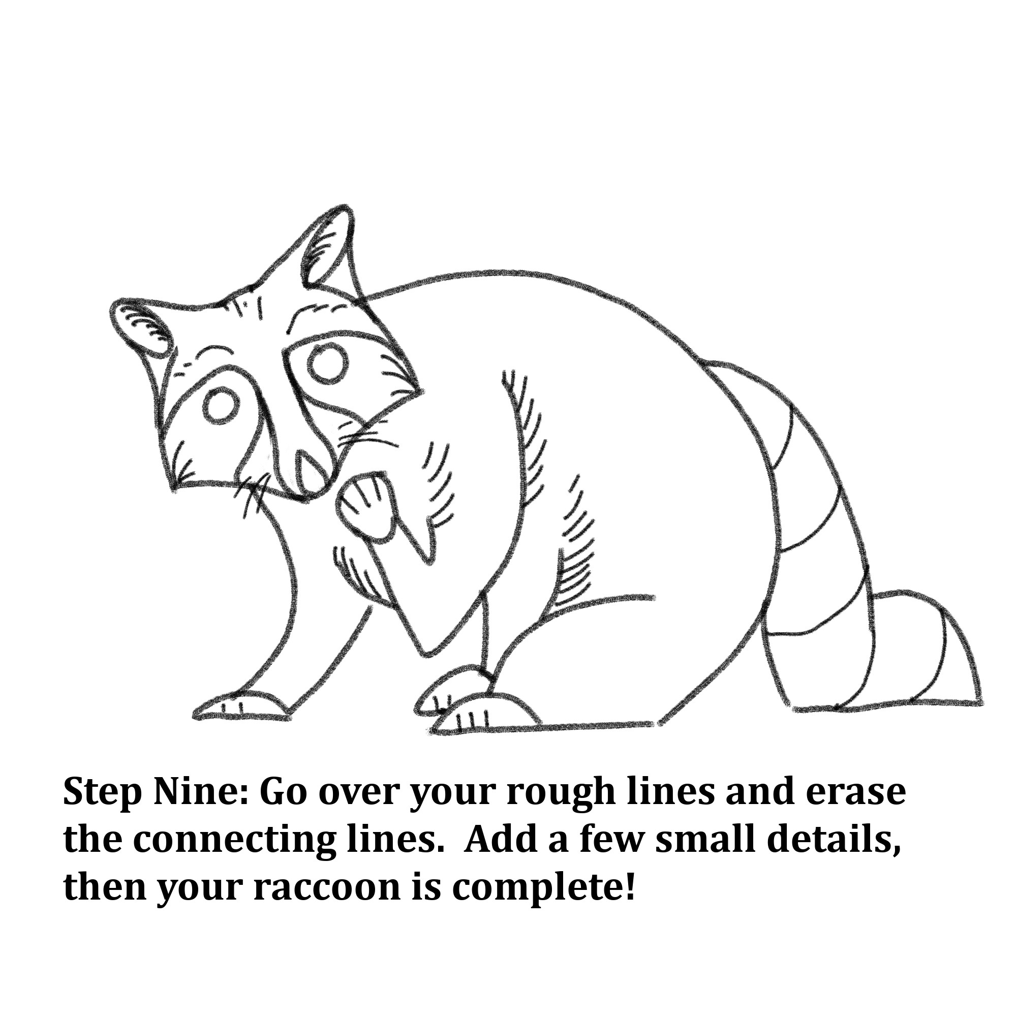"Drawn shapes with text instructions: ""Step Nine: Go over your rough lines and erase the connecting lines. Add a few small details, then your raccoon is complete!"""