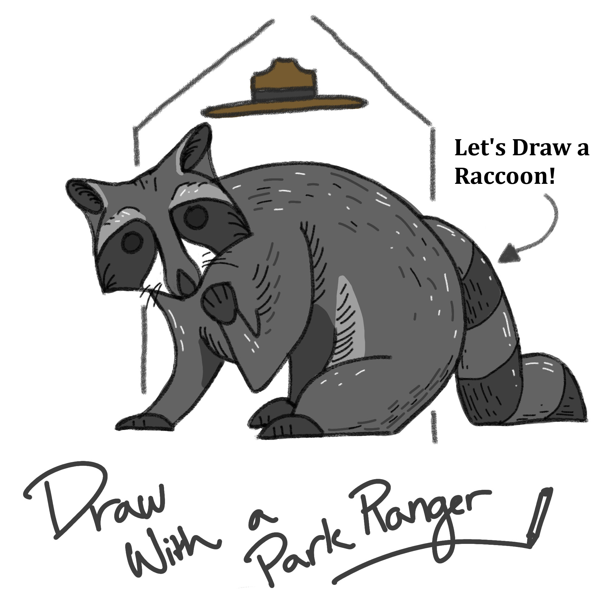 Draw with a ranger. A sketched final picture of a raccoon