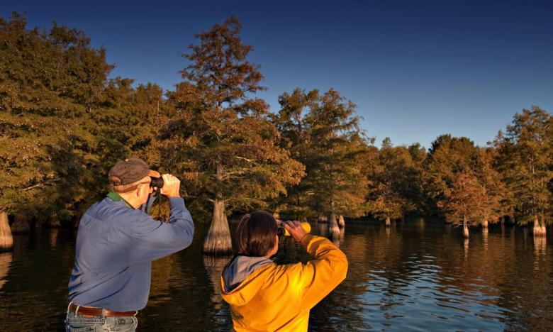 Bird Watching at Lake Chicot State Park