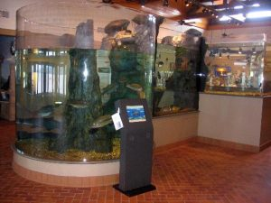 aquarium-with-interactive