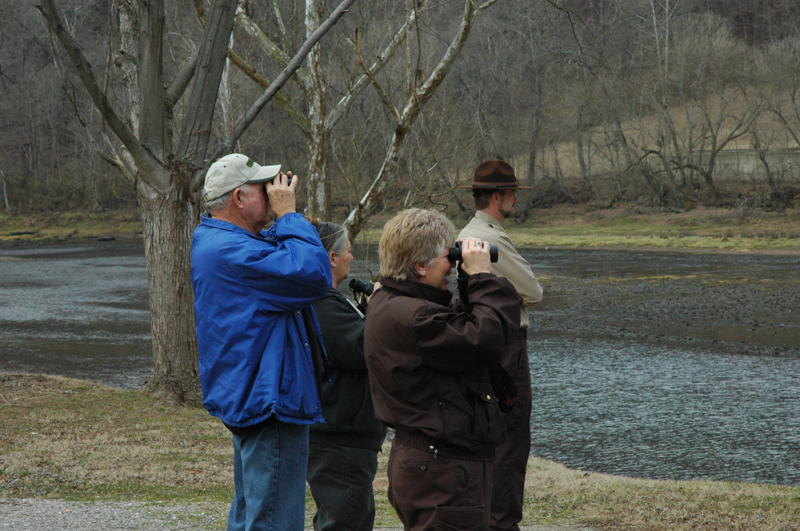 The easist way to see an eagle in the wild for your self is with the help of a park interpreter.