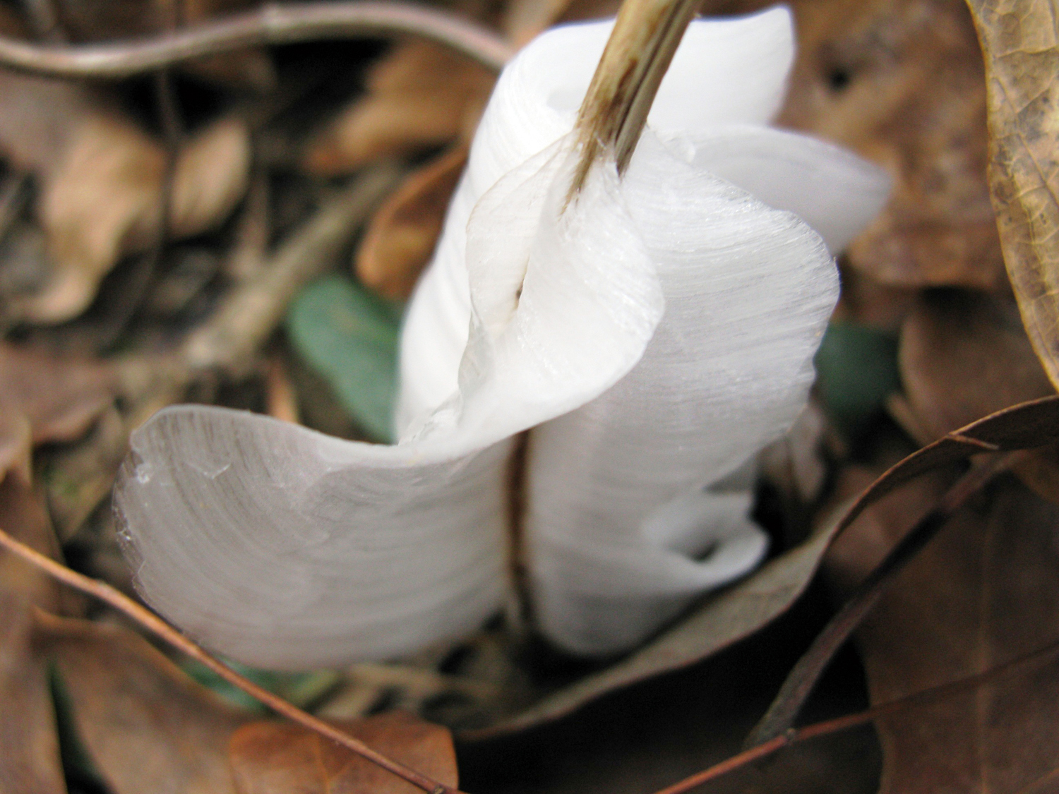If conditions are just right you may even find frost flowers.